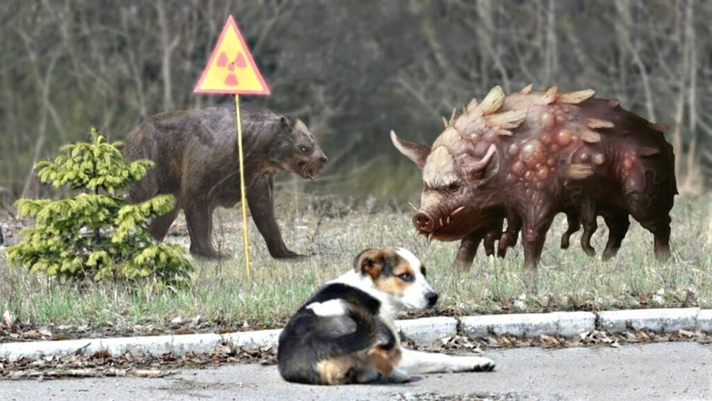 8 Amazing Facts About the Animals of Chernobyl