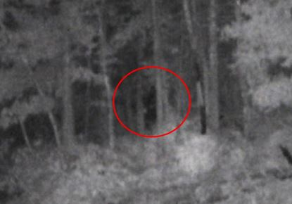 Bigfoot Sighting