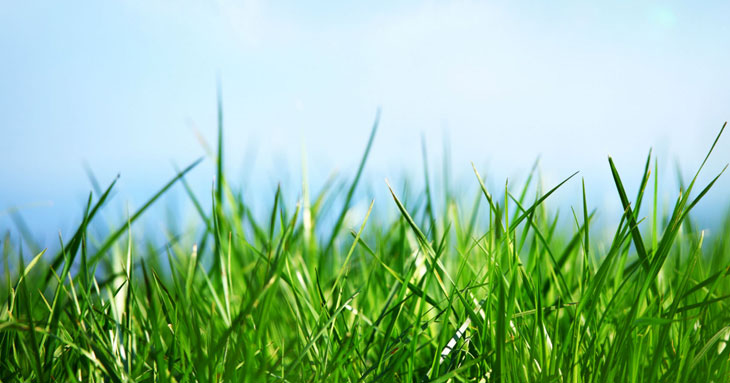 Getting Ready for Spring: Slit Seeding Your Yard