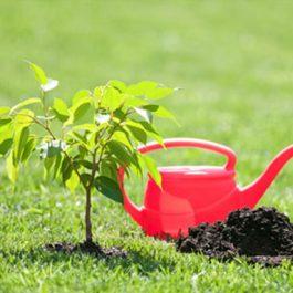 New Tree/Shrub Planting