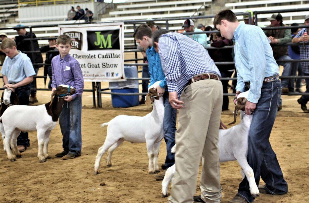 Market Goats