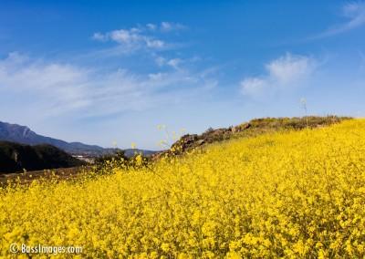 09 Ventura County Scenics