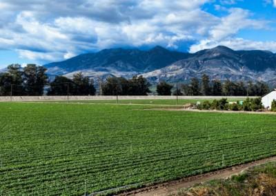 10 Fillmore California panorama