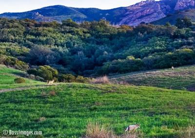16 Ventura County Scenics