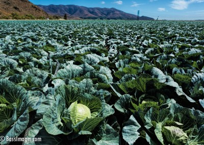 Cabbage Patch near CSUCI-2