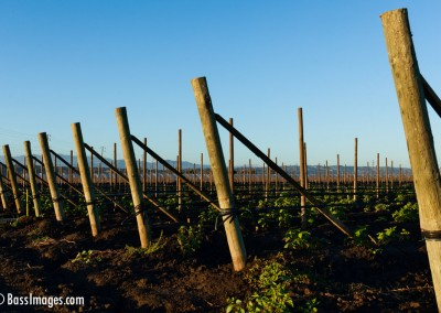 Oxnard crop fence_3890