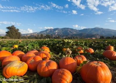Pumpkin_3459