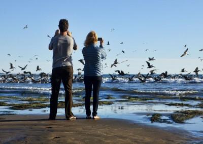Ventura Pier Beach 01