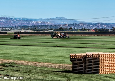 sod farming