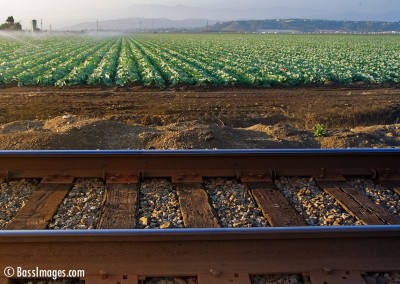 train tracks and cabbage field