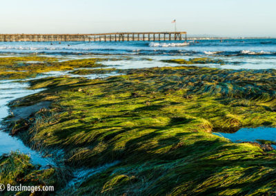Pier with tidepools grass-4