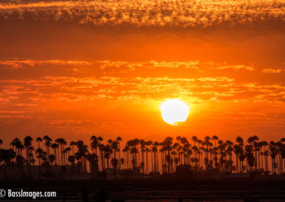 Sunset with row of palms-1