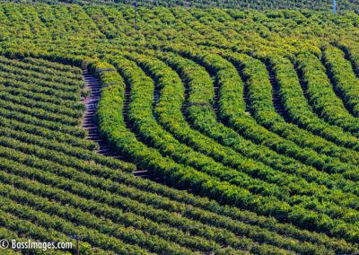 Camarillo crop rows-1-2