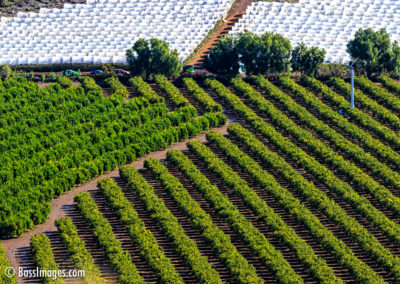 Camarillo crop rows-2-2