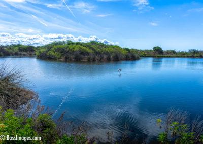 Ventura settling pond 4-5-19-1