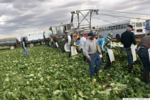 Indoor Ag Means Safer Conditions for Farm Workers
