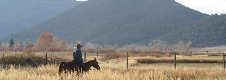 Ranching in Rifle Colorado