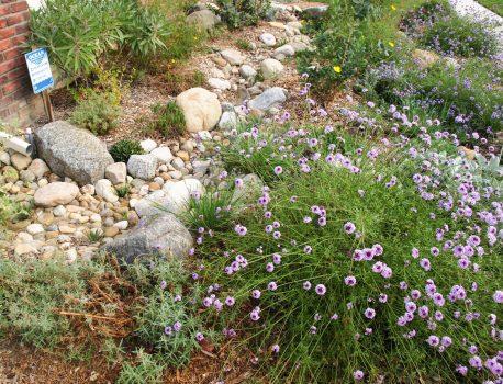 Rainwater Capture and Management