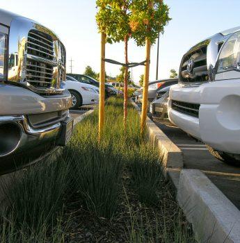 parking lot bioretention strip