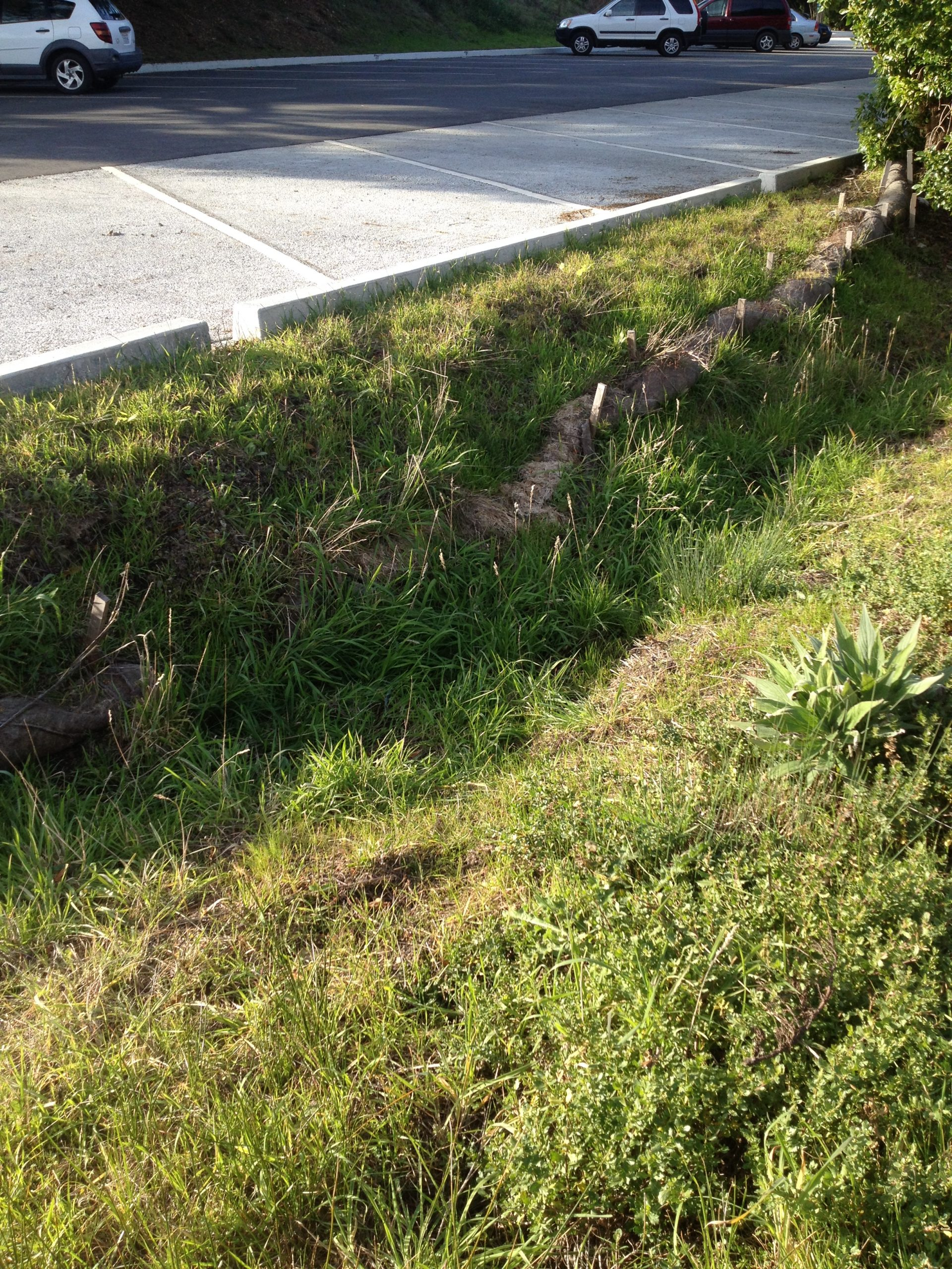 Agate Beach parking lot curb cuts into swale
