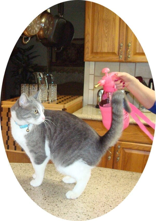 easily train your pets with the PB Mister