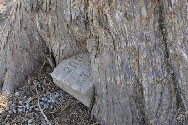 grave-marker-tree1