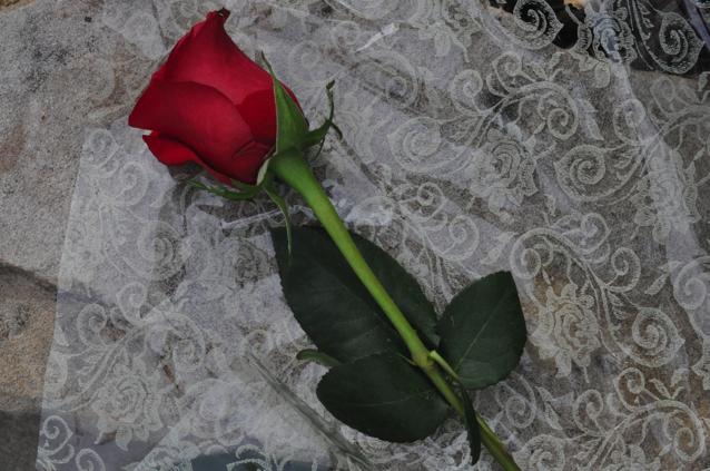 vera-koo-rose-Bianchi Cup