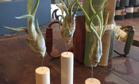 Air Plants with Wood Holders