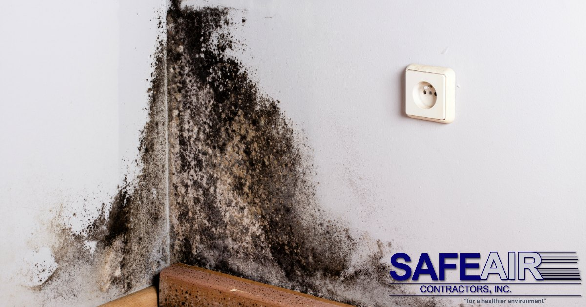 Experienced Mold Remediation