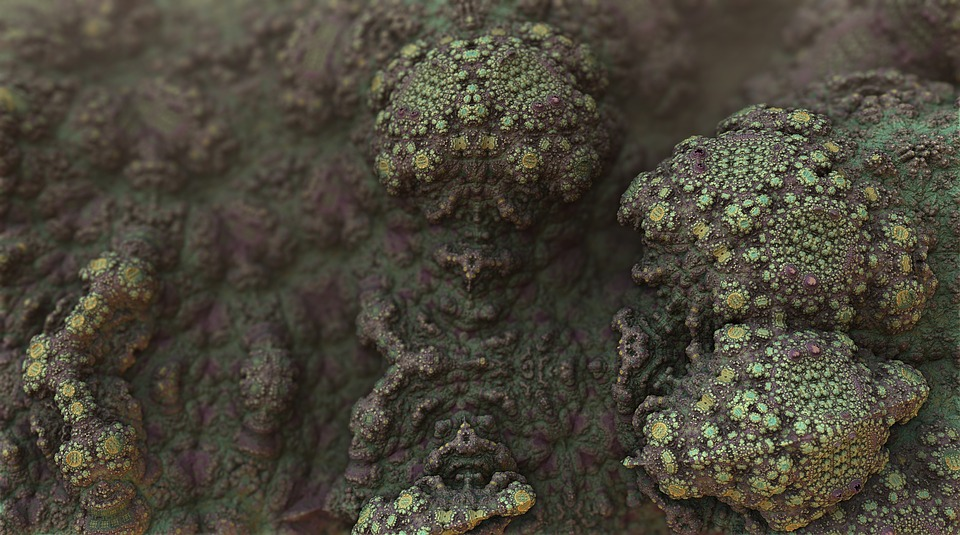 Cause of Mold Spores and How to Have them Properly Removed