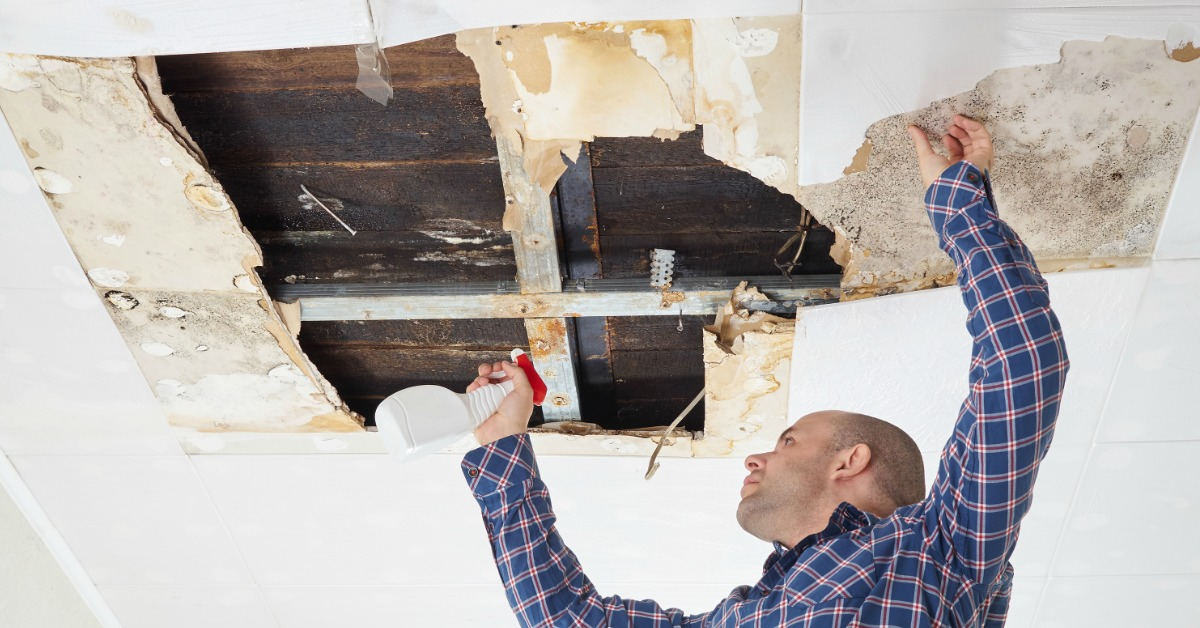 Top Mold Removal Companies Ohio and Pennsylvania