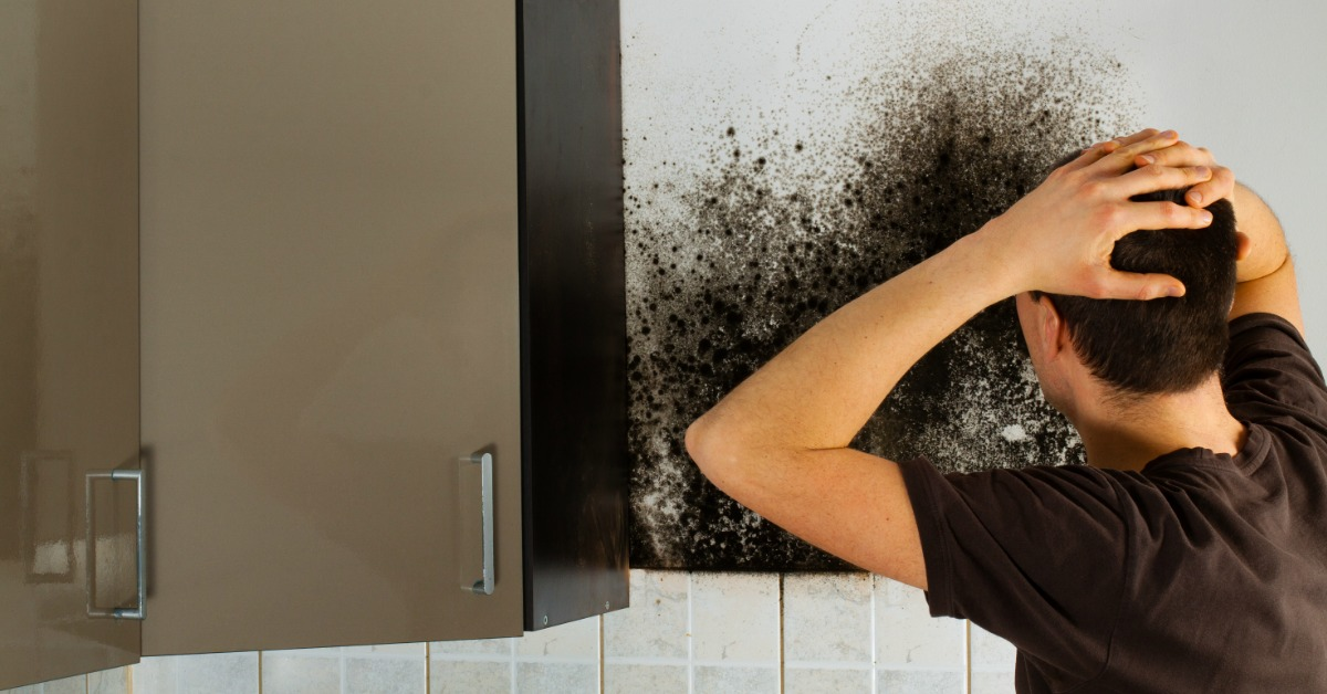 5 Tips to Identifying a Quality Mold Removing Company Ohio Can Trust