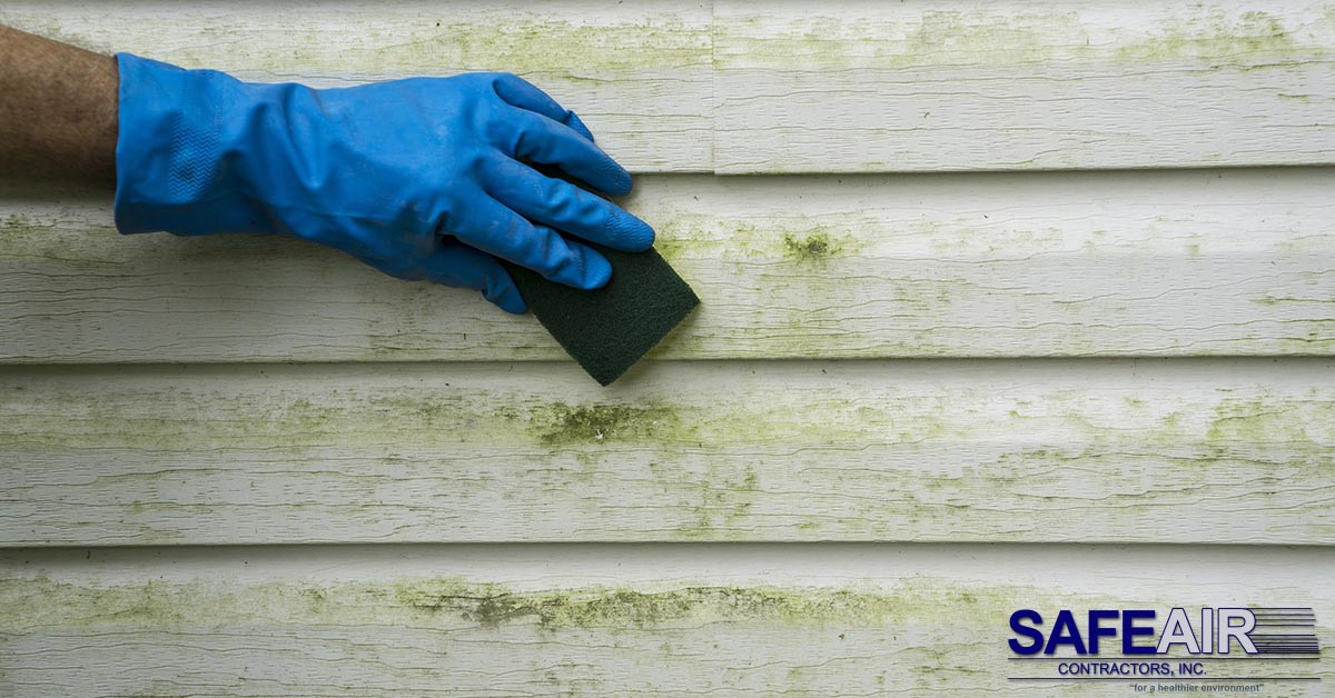 Mold After a Hurricane: What You Should Do to Eliminate the Problem