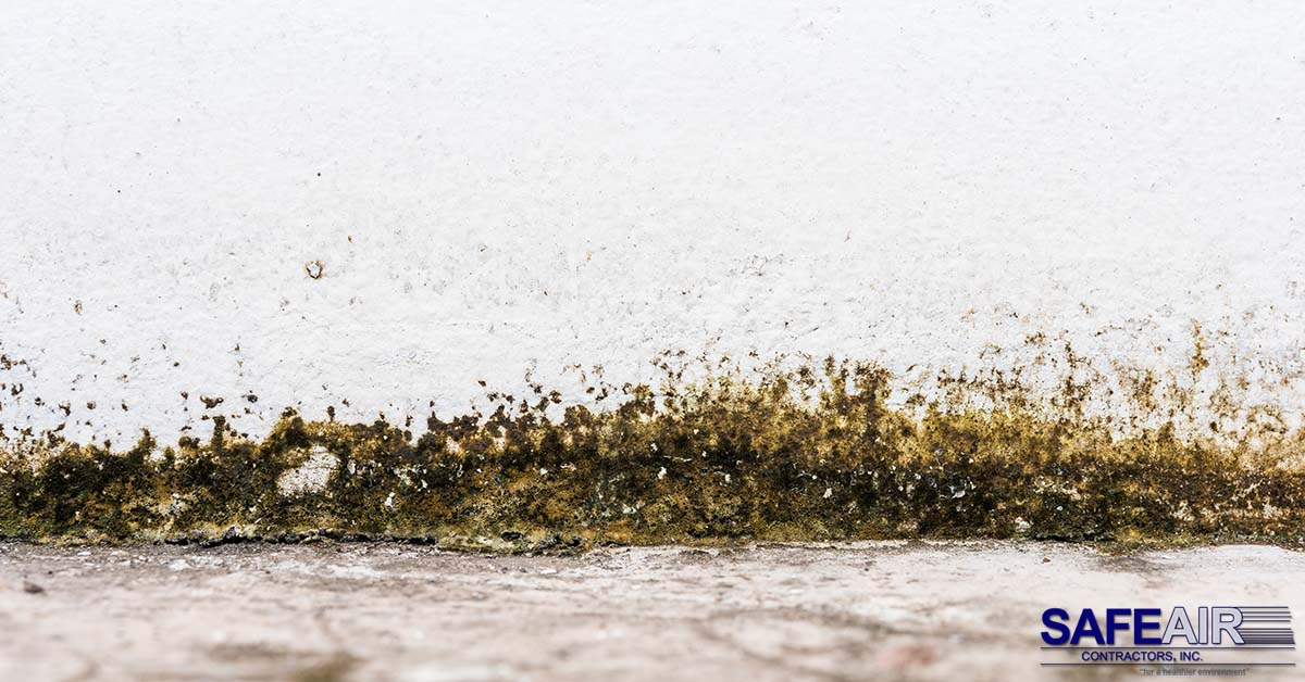 Ohio Black Mold Removal: How Black Mold is Removed