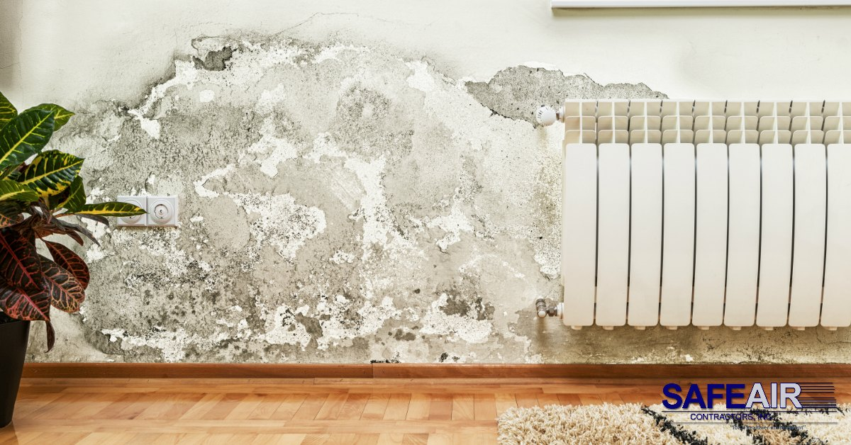 Getting Rid of Mold: Is It Okay to Let Mold Sit For a While?