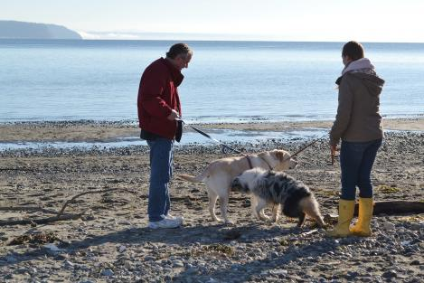 Double Bluff Saltwater Beach Park also has an off-leash dog area.