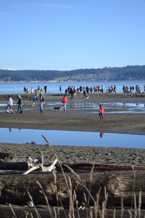 New Year's Day Polar Bear Plunge at Double Bluff beach, gorgeous and sunny!