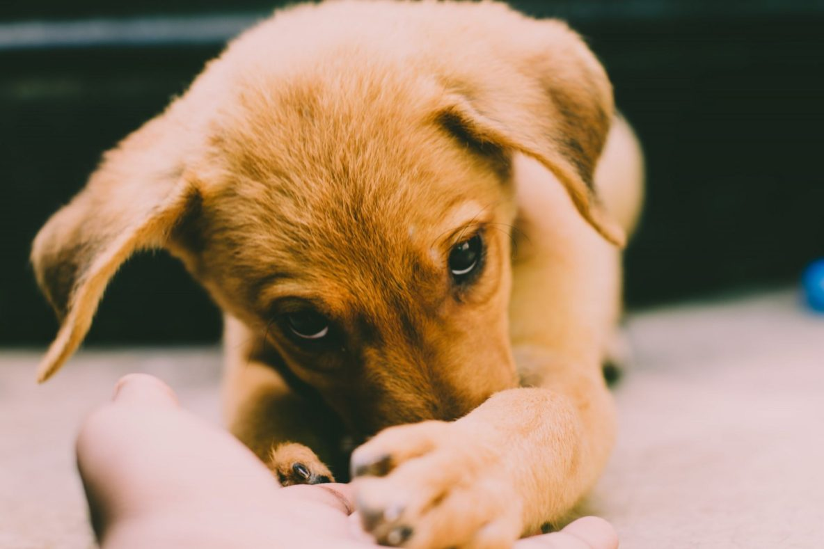 pet friendly renting options for apartments