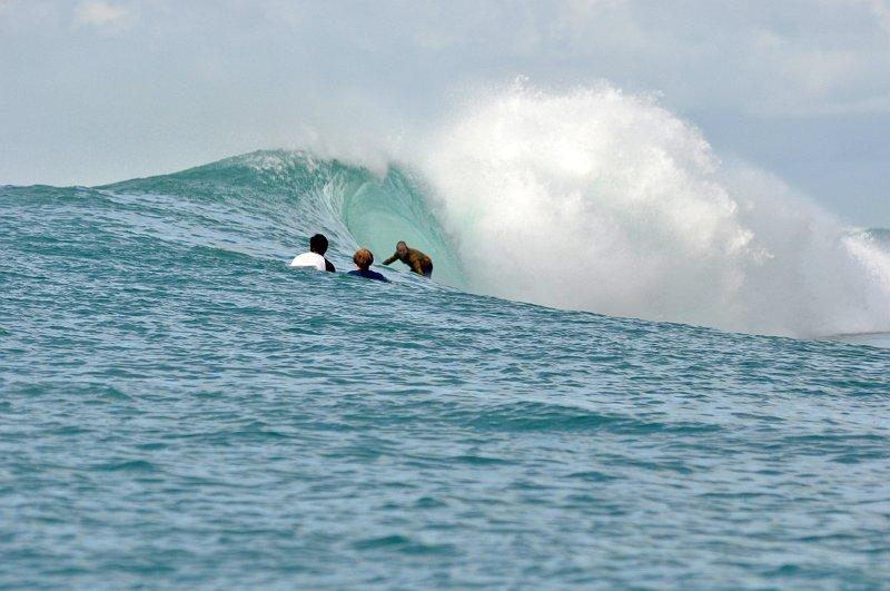 Indo 2012 - Mentawais 35