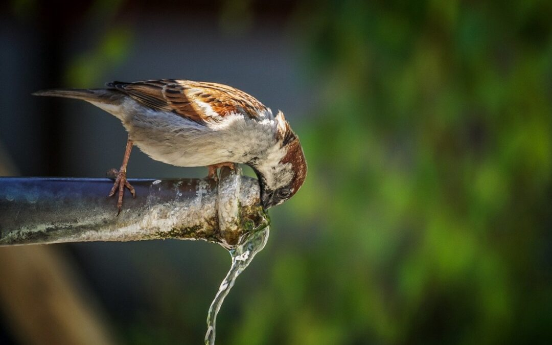 4 Ways to Make the Most Out of Water