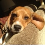 Jax, Adopted 6/2013