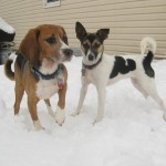 Sammy (Adopted 10/12) & Star (Adopted 10/13)