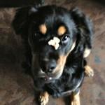 Tobi, Adopted 8/2013