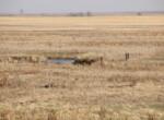 JR_creek in pasture