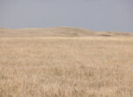 Jones Ranch Fall pasture