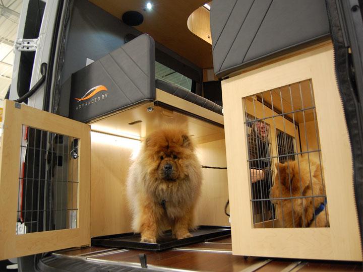 Custom Class B Pets