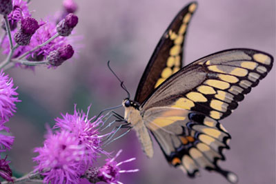 butterfly photo | Expand with Julius and Xpnsion Network