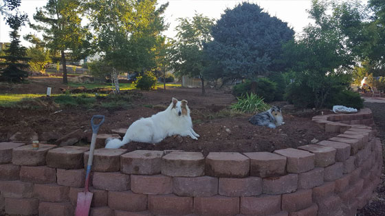 dogs resting on garden   Expand with Julius and Xpnsion Network