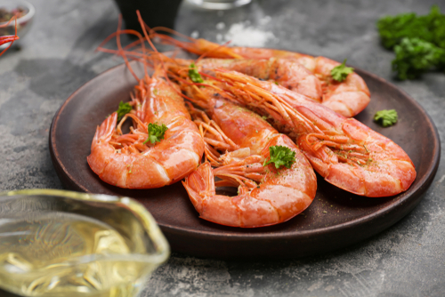 Innovation in Nature – How Shrimp Can Save Lives and Planet