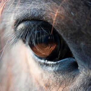 High Speed Camera Consultation: Horse